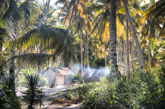 African village with typical straw huts between palm trees in Praia do Tofo in Inhambane, Mozambique