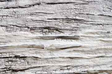 soft focus bark of tree background