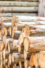 Pile of tree trunks cut