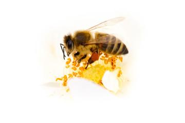 Biene Blume Fruhling Sommer Blute Bienen