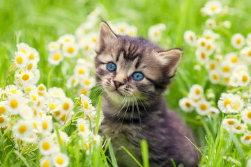 Portrait of cute little kitten outdoors in flowers