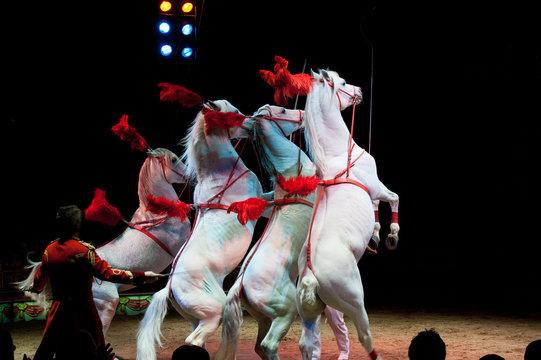 rampant circus horses on black background