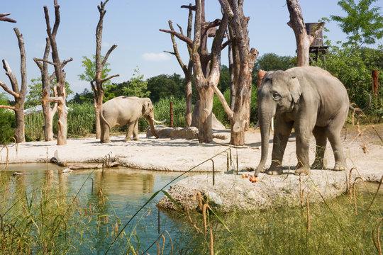 Ausflug im Elefantenpark