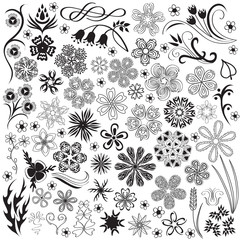 Floral graphic elements for design. Vector.