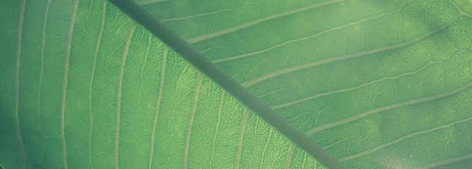leaf background I