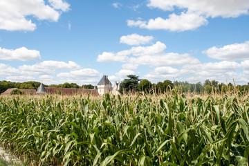 corn field in France with castle in background