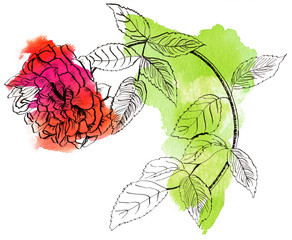 An ink and watercolor line drawing of a rose