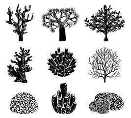 Wall Mural - Vector set of black coral silhouettes