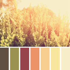dreamy and abstract landscape with lens flare. image with palette color swatches