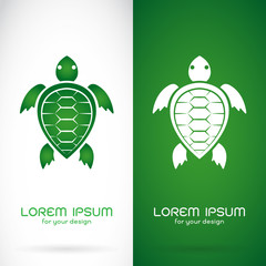 Vector image of an turtle design on white background and green b