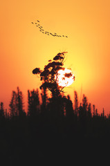 sun down and tree with birds