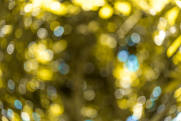 Abstract bokeh and blurred colorful nature background