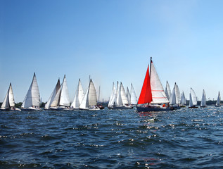 lots of sailboats on a blue surface of water against the blue sky