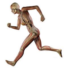 Donna corpo anatomia fitness, muscoli e scheletro