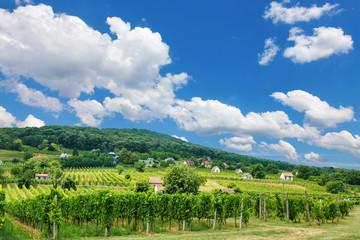 Vineyards in Villány, Hungary, summer of 2015
