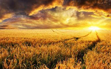 Fotoväggar - Sonnenuntergang auf Feld, Fokus auf Vordergrund