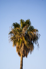 Palm Three With Blue Sky Background