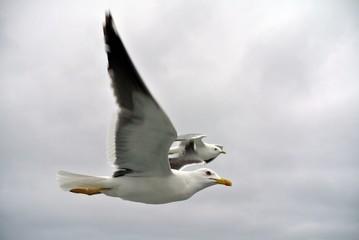 Летящие чайки в пасмурную погоду.