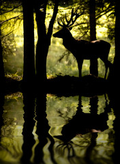 Wall Murals Bestsellers Cerf à contre jour