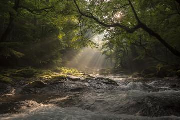 Fotomurales - 菊池渓谷の光芒
