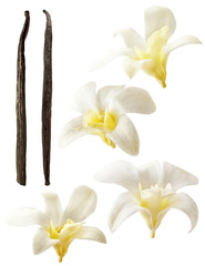 Vanilla flowers aromatic, fresh vanila flower and stick on white background for ingredient label.