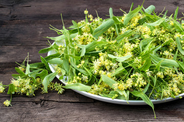 Herbal medicine: linden flowers collected for drying