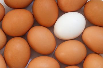 Chicken egg background full frame. Background of fresh eggs. Brown and white eggs.