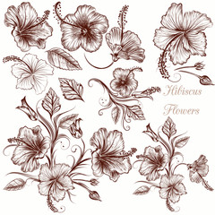 Set of vector hand drawn hibiscus flowers