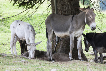 donkey in the farm