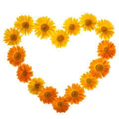 Calendula In Love Shape