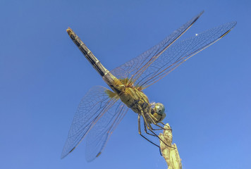perfect dragonfly
