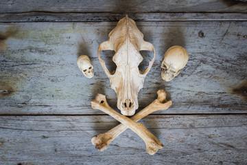 Still Life skull close up of wooden Background