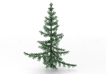 spruce  pine tree isolated on white