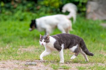 Gatto randagio con cane meticcio liberi nel prato