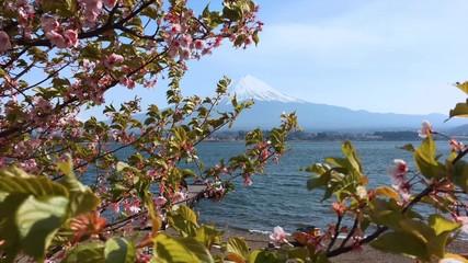 Fotomurales - 4k, Fujisan view from Kawaguchiko lake, Japan