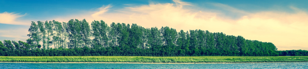 Panorama beach landscape with trees on a row