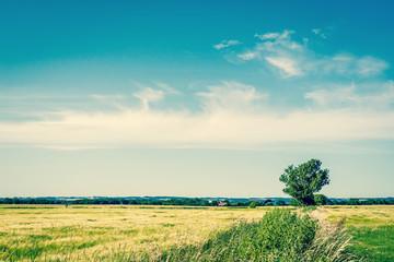 Single green tree on a field