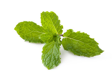 Fresh mint herb leaves isolated on white background