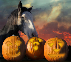 Horse Halloween. Horse grabbing one of three pumpkins