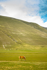 Wild horse in a valley