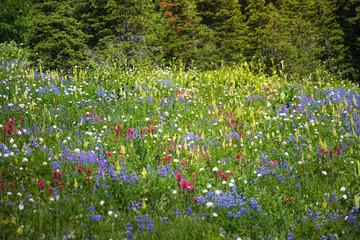 Beautiful wild flower at Mt. Rainer