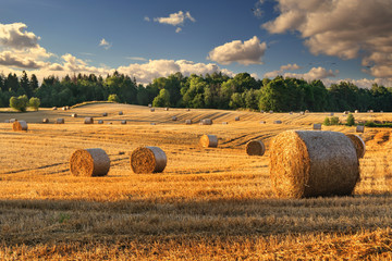 Haystacks on the field. Summer, rural landscape. Fototapete