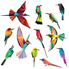 Birds-set of colorful meropidae birds low poly design isolated on white background.Southern,Northern Carmine bee eater,Blue tailed bee eater,Black, Green bee eater,White fronted,Red bearded bee eater.