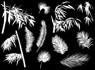 palm and bamboo branches silhouettes isolated on black