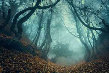 Foto op Canvas Bos Trail through a mysterious dark old forest in fog. Autumn