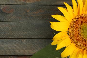 Beautiful sunflower on wooden background