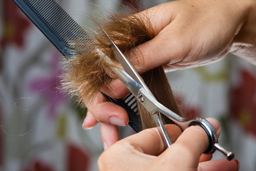 hands of hairdresser trimming hair with scissors