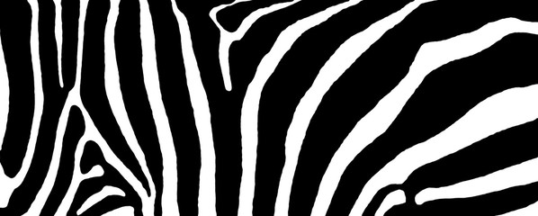 The Zebra stripes
