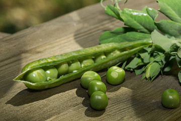 fresh green peas - pod and leaves