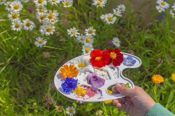 colors of nature. hand holding a palette with flowers on a background of flowering garden